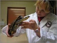 vet student holding tortoise